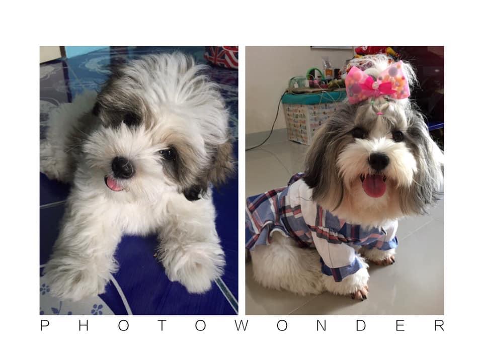 Dogilike.com :: อวดภาพน้องหมาตอนเด็ก มาดูกันว่าใครจะน่ารักสุด!