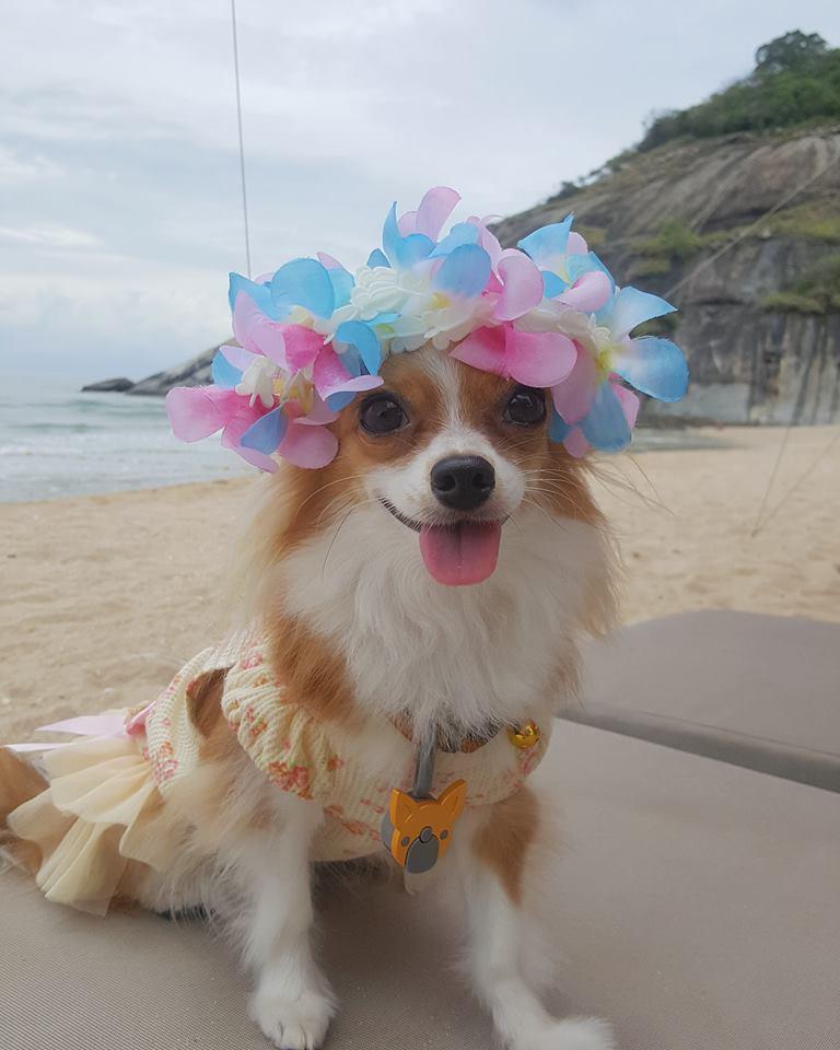 Dogilike.com :: พร็อพแน่มากแม่!!! ... มาดูแฟชั่นจี๊ด ๆ รับสงกรานต์ของน้องหมากัน
