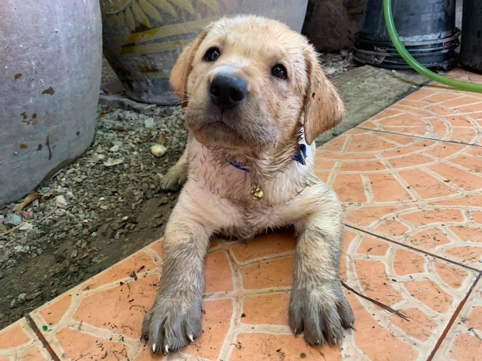 Dogilike.com :: รวมภาพน้องหมาแสบระดับสิบ กับวีรกรรมที่เห็นแล้วไม้เรียวสั่น!
