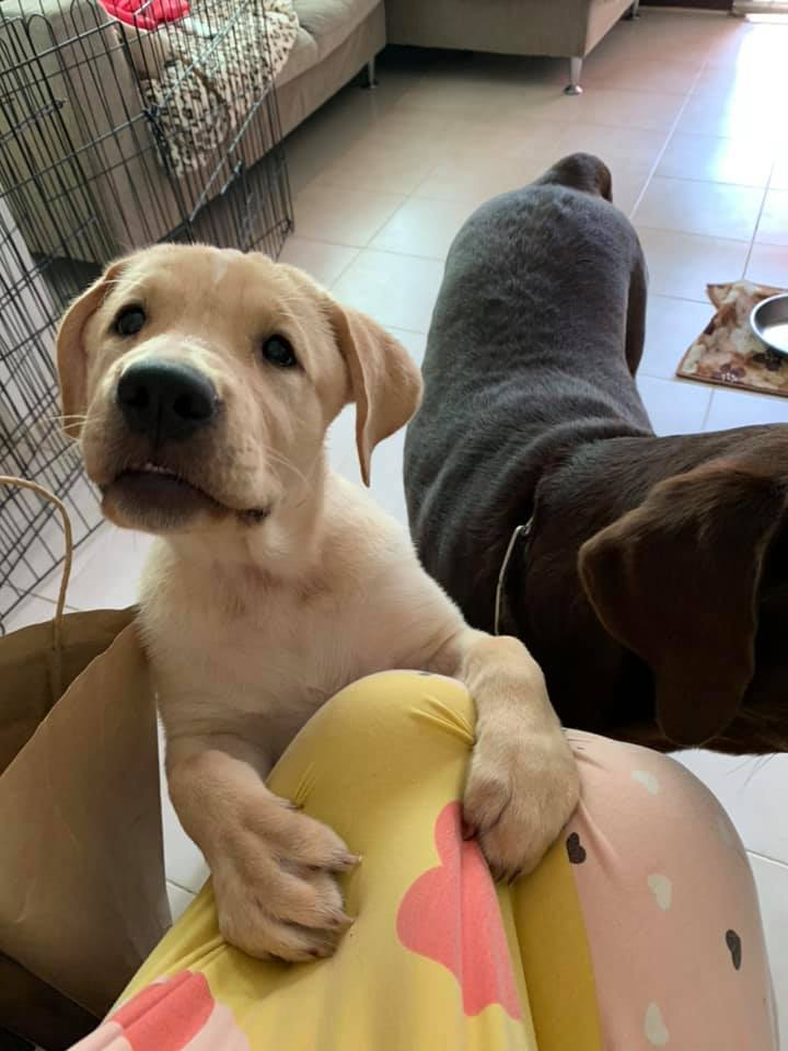 Dogilike.com :: รวมภาพน้องหมาน่ารักขี้อ้อน เจอแบบนี้เป็นใครก็แพ้!