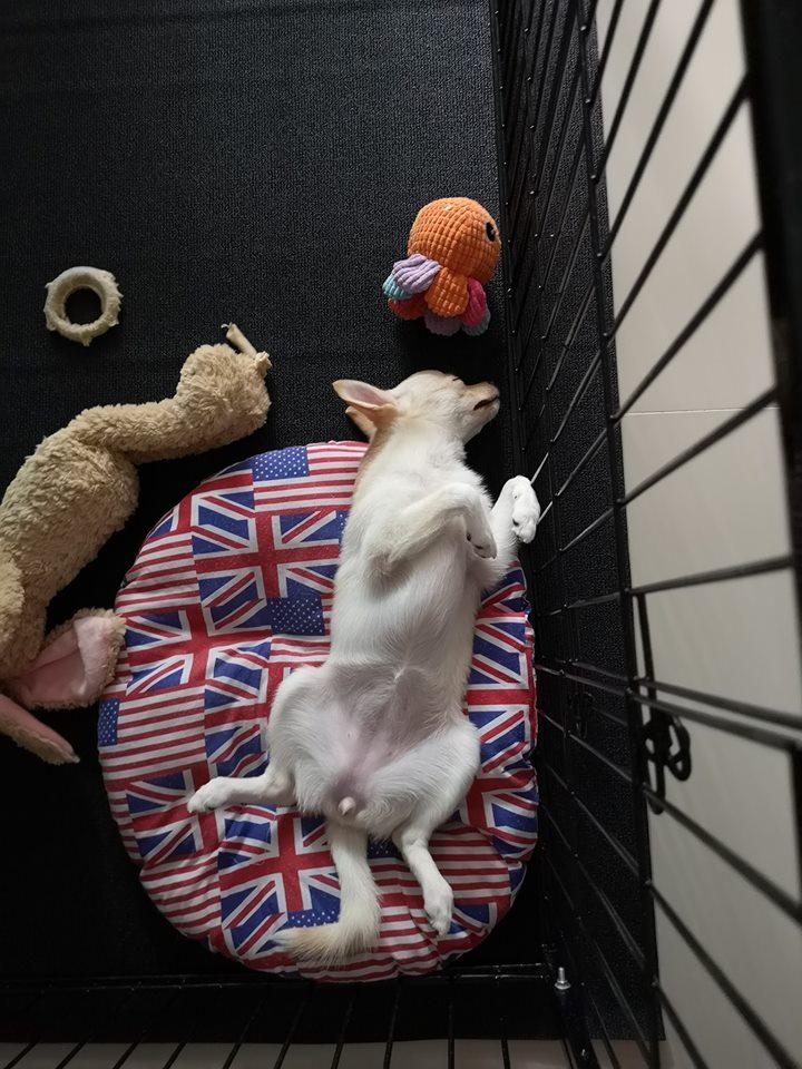 Dogilike.com :: ก็มาดิ! รวมภาพน้องหมาอวดพุงน่าฟัด