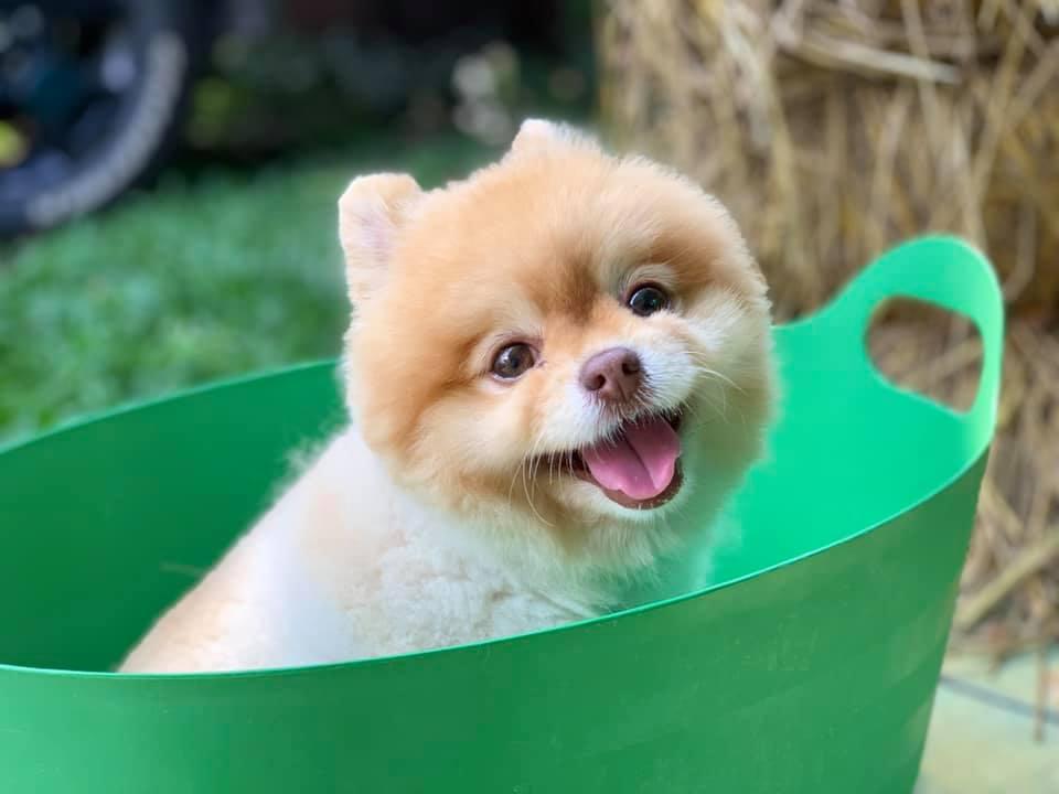 Dogilike.com :: รวมภาพสุดฮา ... เมื่อน้องหมาโดนจับอาบน้ำ
