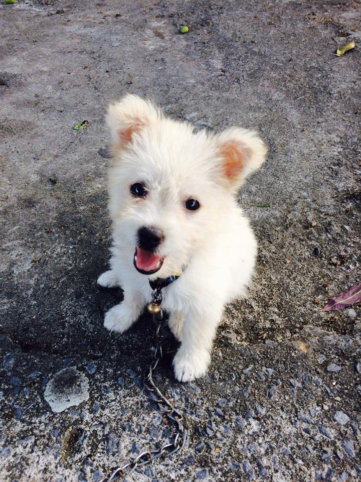 Dogilike.com :: รวมแก็งเจ้าจิ๋วสุดแสบ ตัวเล็กแต่ความซ่าไม่เล็ก