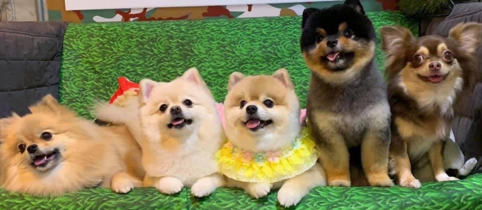 "Dogilike.com :: √«Ѕб°зІа®й""®'л«ЎібЇ µ—«а≈з°бµи§«""ЅЂи""дЅиа≈з°"