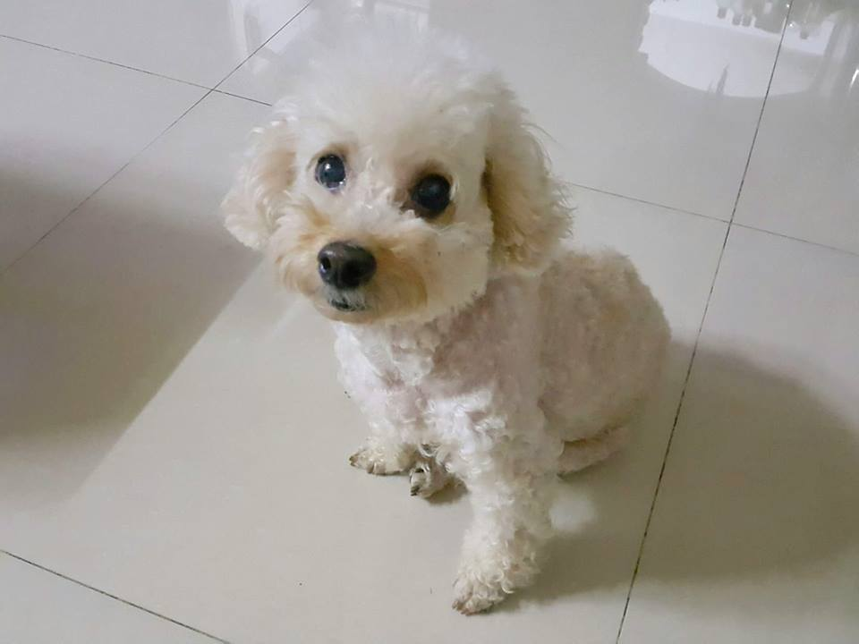 Dogilike.com :: รวมภาพน้องหมาหน้าเด็ก ... ดูแล้วทายอายุไม่ถูกเลย
