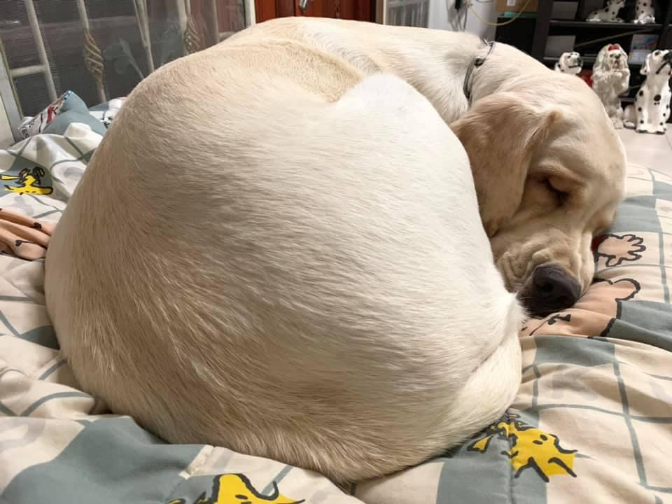 Dogilike.com :: รวมภาพน้องหมาตัวแน่นหนุบหนับ น่าฟัดสุด!!