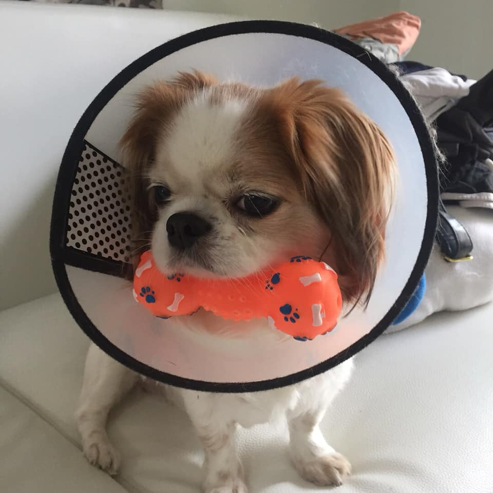 Dogilike.com :: รวมภาพน้องหมาสายเหวี่ยง มองแรงเก่ง!!!