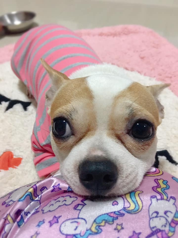 Dogilike.com :: รวมภาพโมเม้นท์สุดอ้อนของน้องหมาติดเจ้าของ