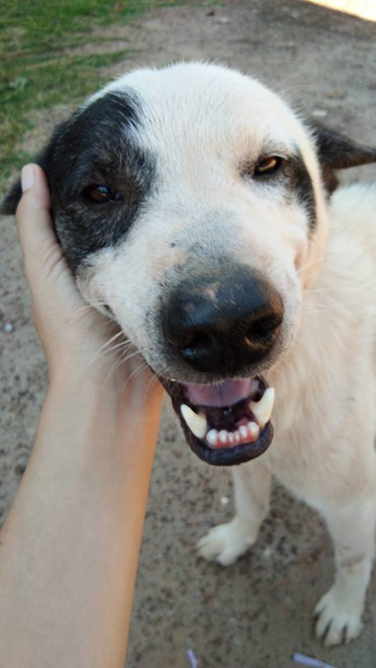 Dogilike.com :: รวมภาพน้องหมาสายเกา ... โดนเกาจนฟินสุด ๆ หยุดไม่อยู่
