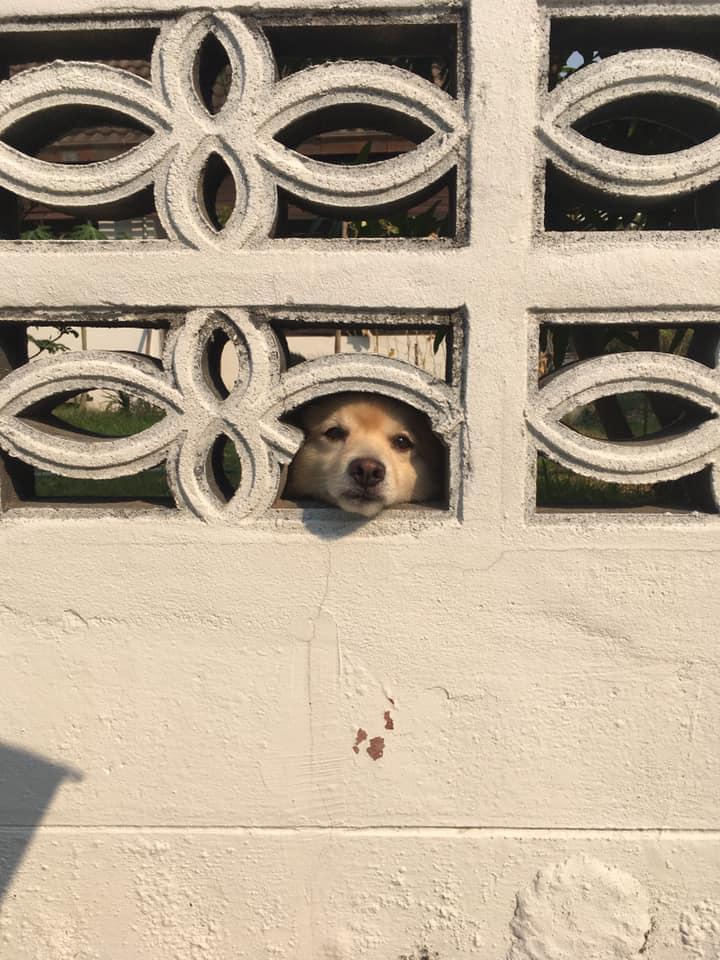 Dogilike.com :: รวมภาพสุดฮาน้องหมาจอมเจ๋อ เผือกเก่ง!!!