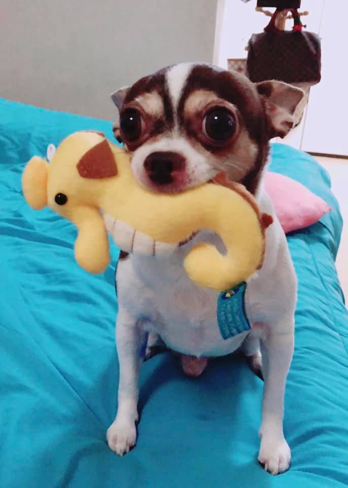 Dogilike.com :: รวมภาพน้องหมาสายฮา ชอบคาบของประหลาดมาอวด!