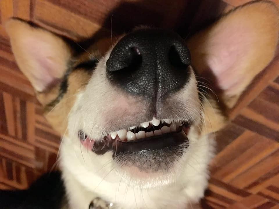 Dogilike.com :: รวมภาพฮา น้องหมายิ้มแฉ่งโชว์ฟันสวย
