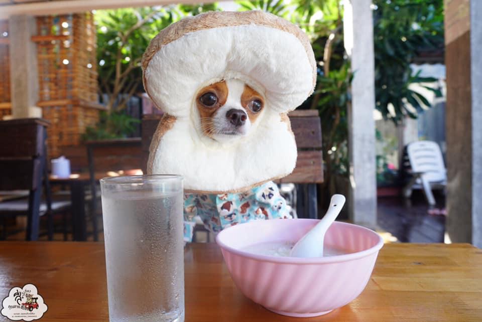 Dogilike.com :: รวมความฮา เมื่อน้องหมาโดนเจ้านายแกล้ง!