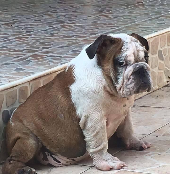 Dogilike.com :: อย่างฮา ... เมื่อน้องหมาเบื่อเจ้าของ หน้าก็จะเซ็งประมาณนี้แหละ