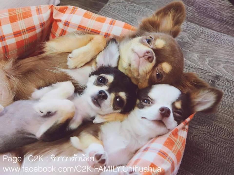 Dogilike.com :: รวมภาพน้องหมานอนท่ายาก ... ฮาไปอีก