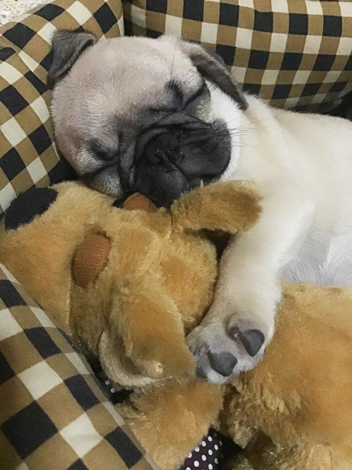 Dogilike.com :: รวมภาพน้องหมาขี้หวง ของรักของข้าใครห้ามยุ่ง!!!