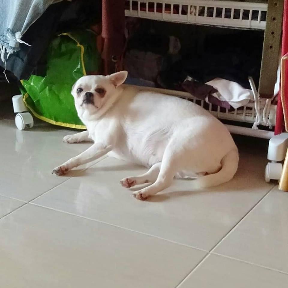 Dogilike.com :: รวมภาพน้องหมาเหนียงฟูดูน่าฟัด