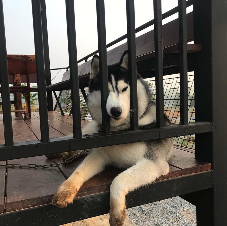 Dogilike.com :: หน้างอกว่านี้มีอีกป่ะ! มาดูหน้าน้องหมาขี้งอนกัน