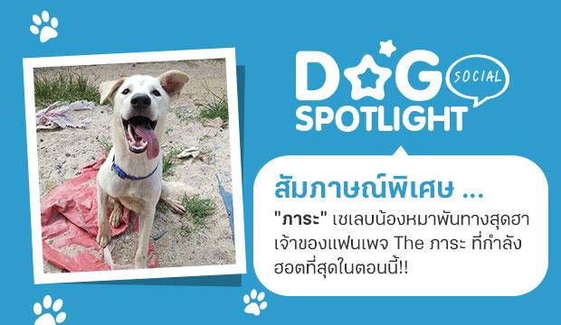 Dogilike.com :: สัมภาษณ์พิเศษ ... ภาระ เซเลบหมาพันทางสุดฮา ที่กำลังฮอตที่สุดในตอนนี้!!