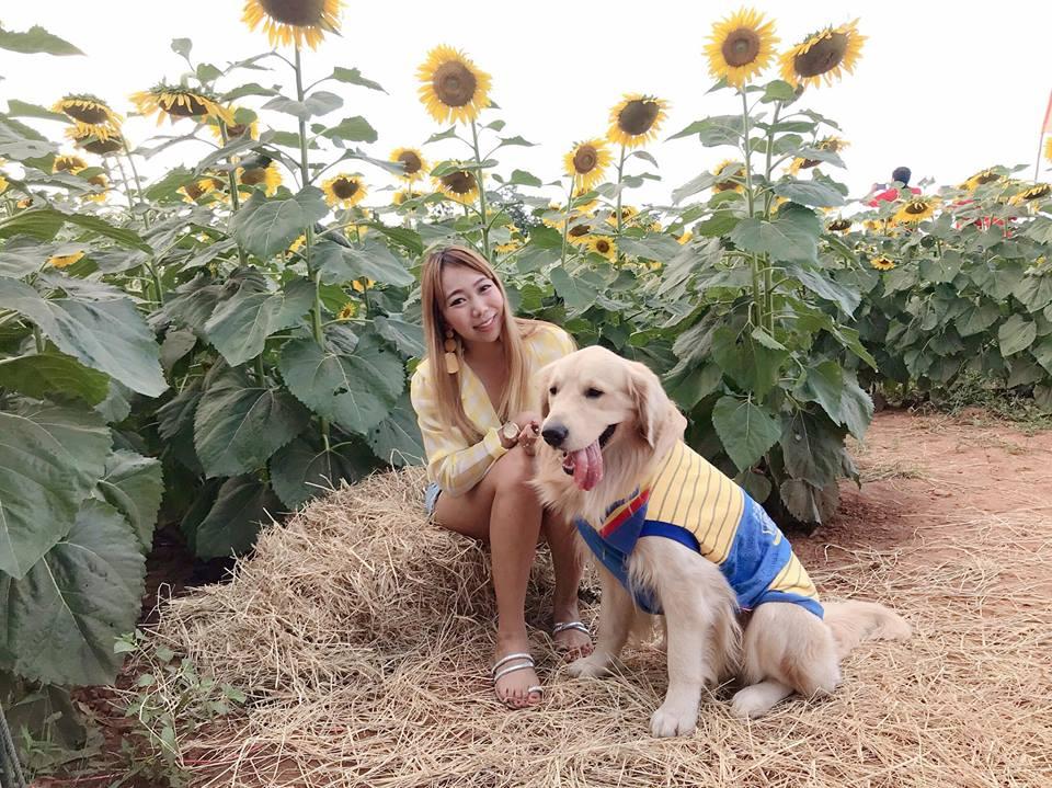 Dogilike.com :: สัมภาษณ์พิเศษ ... สตีฟจิ๊บ น้องหมาโกลเด้นสุดติสต์ชีวิตติดเที่ยว