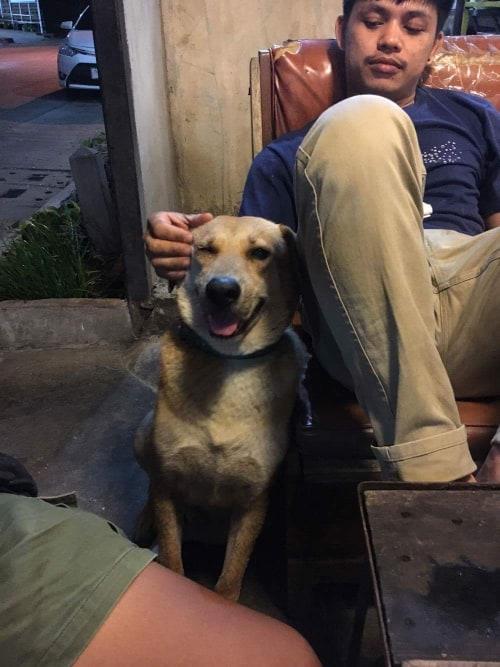 Dogilike.com :: สัมภาษณ์พิเศษ ... เซเว่น น้องหมานั่งดริ๊งค์ประจำร้านขวัญใจชาวโซเชียล