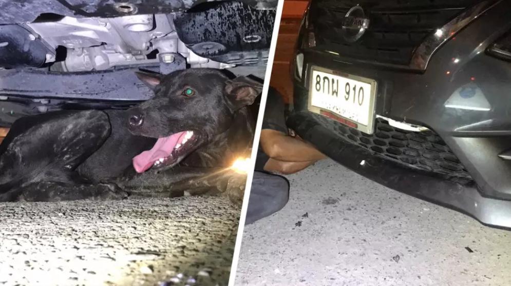 Dogilike.com :: หนุ่มชลบุรีเป็นงง น้องหมาดำเข้าไปอยู่ในกระจังรถได้ยังไง