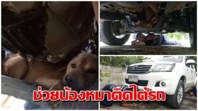 Dogilike.com :: น่าสงสาร ตูบหนีเข้าไปติดได้รถกระบะ เหตุตกใจเสียงประทัดลอยกระทง
