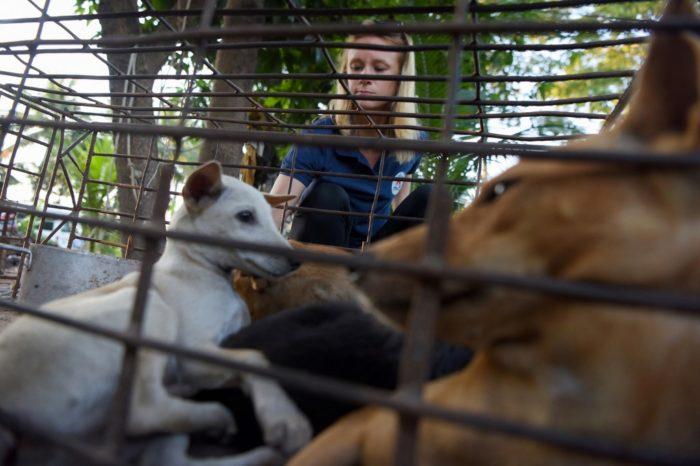 Dogilike.com :: เปิดโปงการค้าเนื้อหมาในกัมพูชา 1 ปีมีหมาถูกฆ่ากว่า 3 ล้านตัว!!