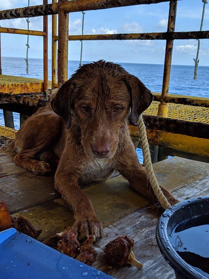 Dogilike.com :: ระทึก ตามติดภารกิจช่วยเหลือน้องหมาลอยคอกลางทะเลห่างจากฝั่ง 220 กม.