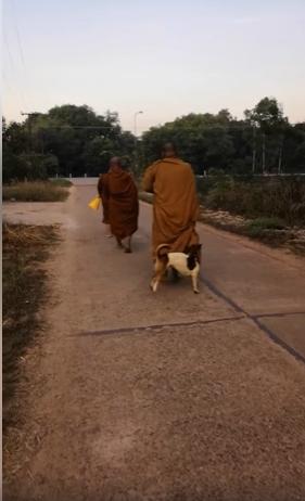 Dogilike.com :: เอ็นดู เจ้าของบวชเป็นพระเดินบิณฑบาตร หมาจำได้วิ่งไปงับจีวรทักทาย