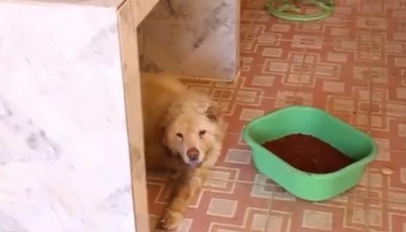 Dogilike.com :: เจ้าหน้าที่ช่วยสุนัขถูกทิ้งในบ้านเช่าไร้คนดูแล ช่วยชีวิตได้ 2 ตาย 1!!