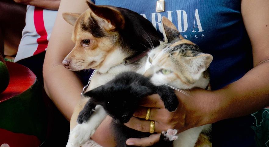 Dogilike.com :: เป็นงง! สาวสกลฯ อ้าง หมา-แมว ที่เลี้ยงไว้ผสมพันธุ์กันจนมีลูก