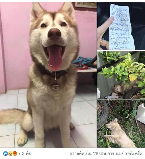 Dogilike.com :: อุทาหรณ์! ไซบีเรียนโดนวางยาเบื่อ คาดเหตุจากเพื่อนบ้านไม่พอใจเจ้าของปล่อยไปอึหน้าบ้าน