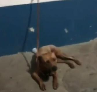 Dogilike.com :: ทลายบ่อนสู้หมาเถื่อนที่บราซิล พบหมาเจ็บหนัก สุดโหดเสิร์ฟเนื้อหมาให้นักพนันกิน