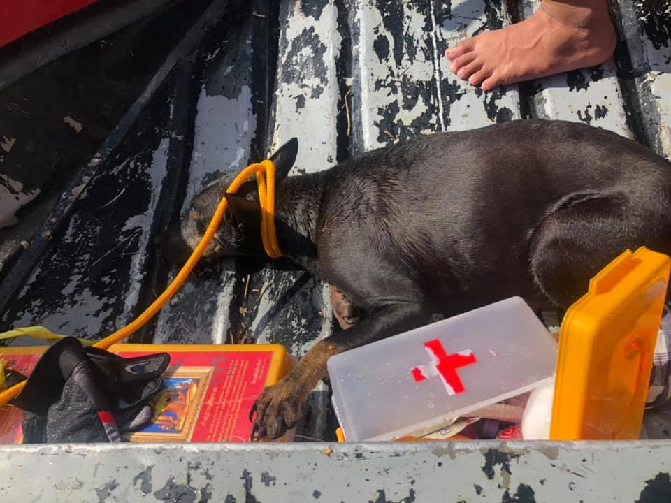 Dogilike.com :: คลิปนาทีชีวิต ก้อง ห้วยไร่ ลงพื้นที่น้ำท่วม ช่วยชีวิตหมาท้องแก่ใกล้คลอด