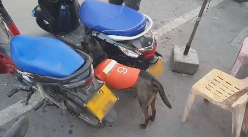 Dogilike.com :: หมาวินน่ารักบอกต่อด้วย ... รู้จักกับ กล้าหาญ หมาประจำวินตลาดแม่กลอง