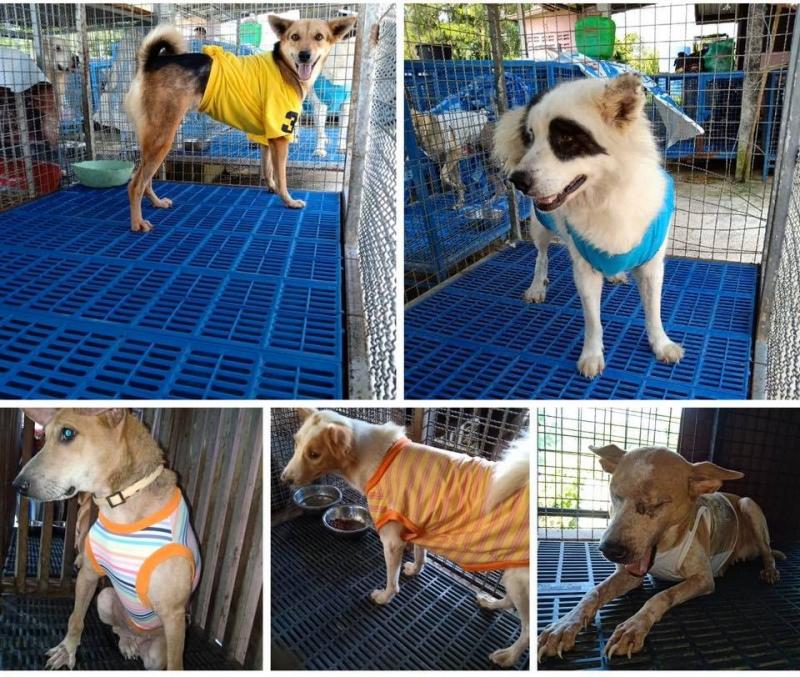 Dogilike.com :: เสื้อมือสองอย่าทิ้ง! ... สัตหีบขอรับบริจาคเสื้อผ้ามือสองให้น้องหมาป่วยใส่คลายหนาว