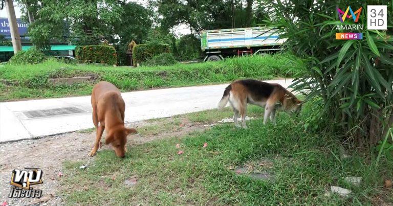 Dogilike.com :: หนุ่มโวย โดนหมาไล่กัดรถคว่ำ เจ้าของเห็นแต่ไม่สนใจ อ้างที่เห็นคือผีเจ้าที่!!