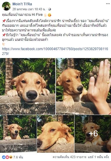 Dogilike.com :: คนรักหมาแชร์รัว ๆ ! ... สาวโพสต์ภาพสุดน่ารัก น้องหมาข้างบ้านดักเกาะรั้วชวนเล่นด้วย