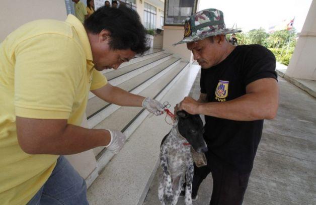 Dogilike.com :: ใจร้ายไปไหม! ชาวบ้านแจ้งพบหมาโดนเอาเขียงห้อยคอ คาดเพราะไล่กวดคน