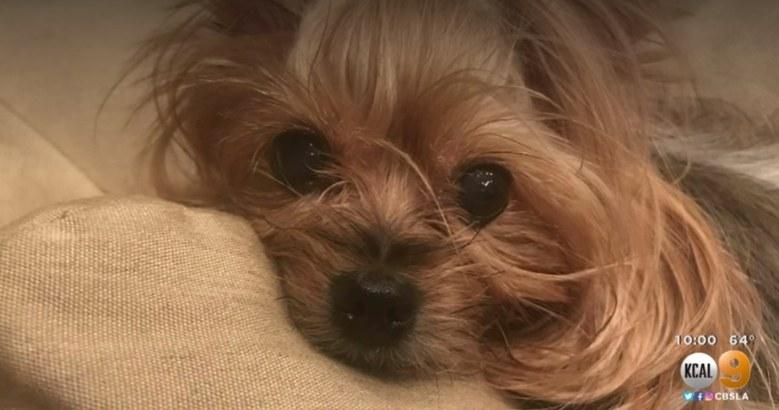 Dogilike.com :: เจ้าของเศร้า พนักงานส่งของโยนกล่องทับน้องหมาบาดเจ็บสาหัส!!