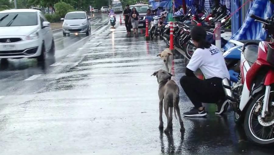 Dogilike.com :: ผู้ประสบภัยน้ำท่วมอุบลฯ ขอรับบริจาคโซ่ล่ามหมาแมว ป้องกันรถชน