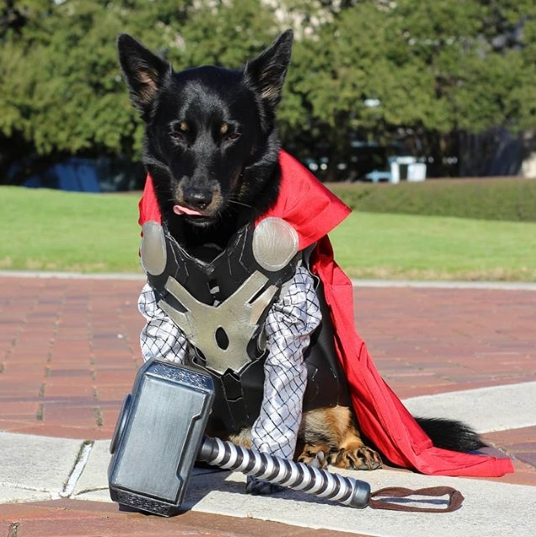 Dogilike.com :: อย่างเด็ด! สาวจับน้องหมาแต่งคอสเพลย์เป็นซุปเปอร์ฮีโรมาร์เวล