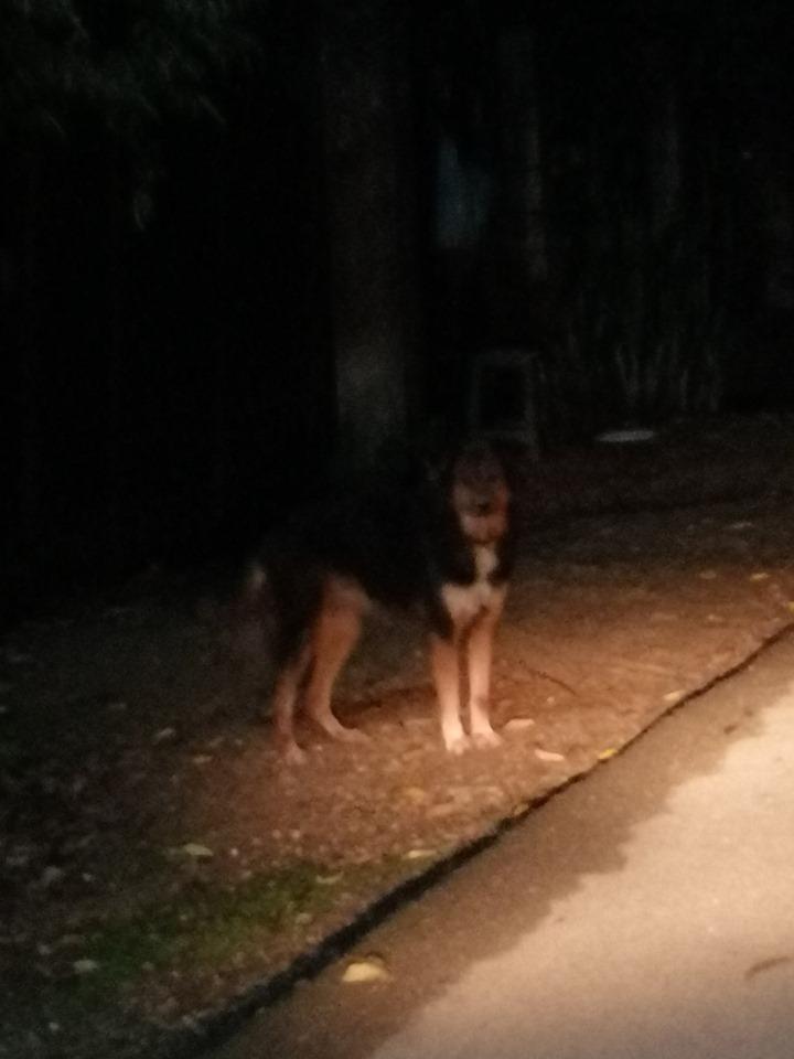 Dogilike.com :: หนุ่มโพสต์ขอความช่วยเหลือ เห็นกับตาเจ้าของโยนหมาทิ้งจากรถ!!