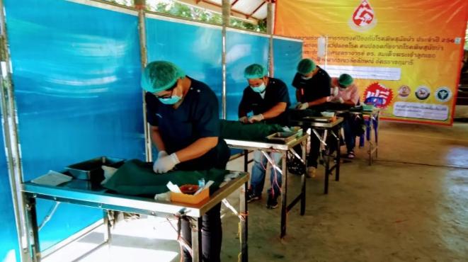 Dogilike.com :: รมว.เกษตรฯ สั่งรณรงค์ผ่าตัดทำหมัน หมา-แมว 6 แสนตัว ฟรีทั่วประเทศ