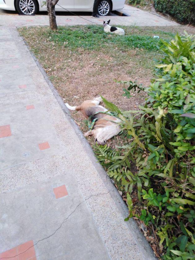 Dogilike.com :: อุทาหรณ์ไฟไหม้บ้านวอดเกือบทั้งหลัง เหตุเปิดพัดลมทิ้งให้หมา-แมว