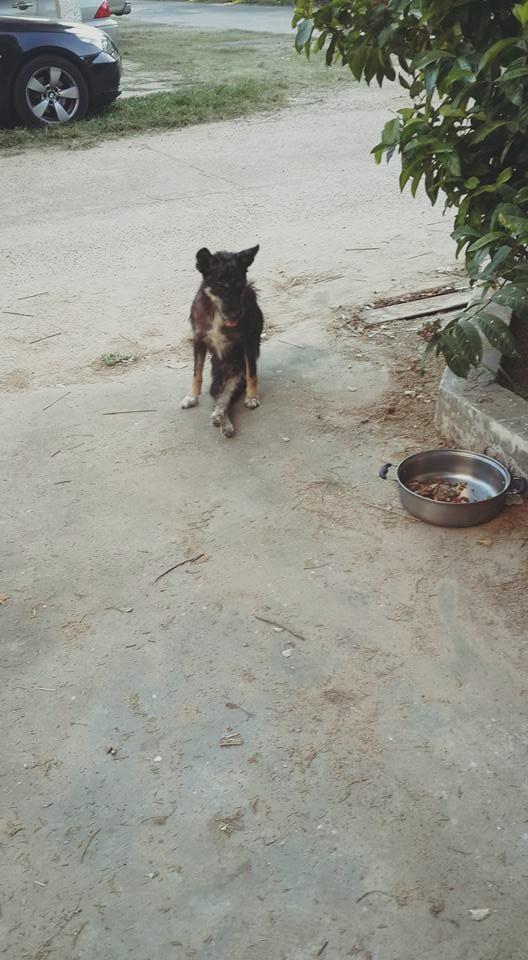Dogilike.com :: สุดประทับใจ น้องหมาขาพิการตระเวนขออาหารกลับไปให้แม่และน้องกิน