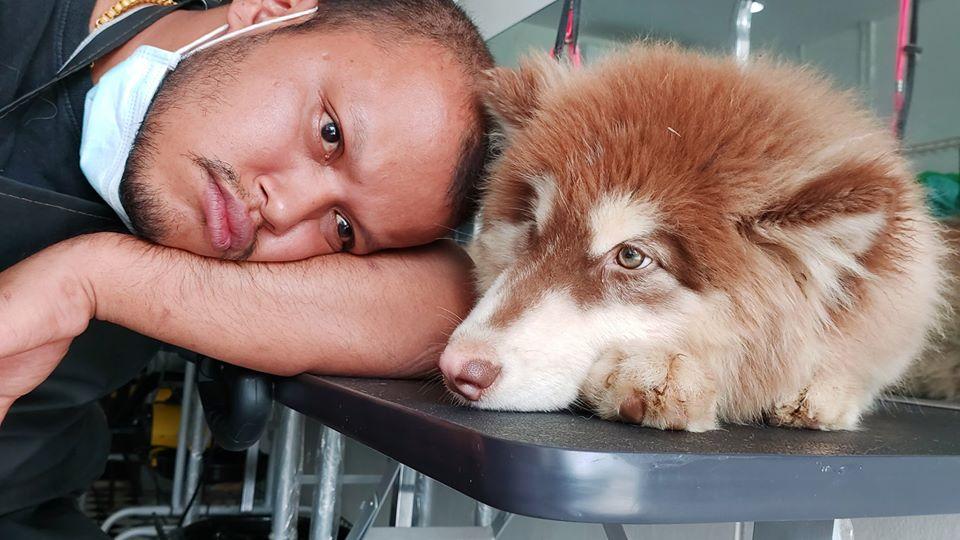 Dogilike.com :: อย่างฮา ... ช่างท้อปโพสต์หยุดอาบน้ำหมาเด็กซักพัก หลังต้องอาบน้ำลูกอลาสกันตัวยักษ์