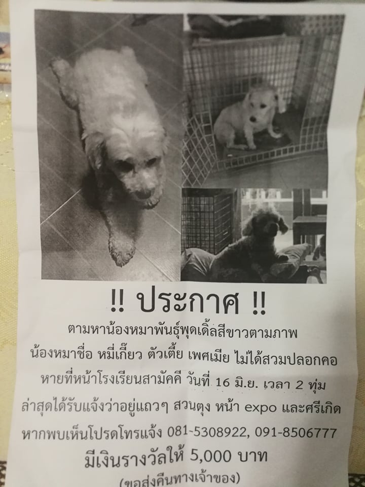 Dogilike.com :: น่ารัก! หนุ่มขอเจ้านายลางานกลับบ้านไปตามหาหมาสุดรักที่หายไป