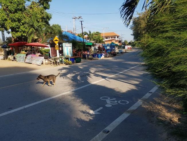 Dogilike.com :: สุดสงสาร แก็งหมาจรเขากะโหลก ปราณบุรี ขาเป๋เป็นแถว เหตุถูกรถชนบ่อย!